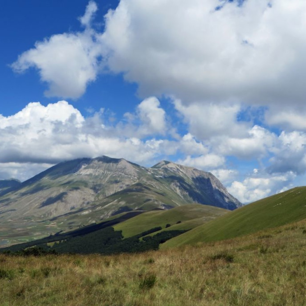 CASTELLUCCIO ESTATE 201422 07 2014 08 12 2015 093