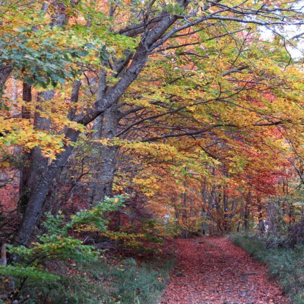 boschi di propezzano