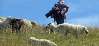 antica via dei pastori