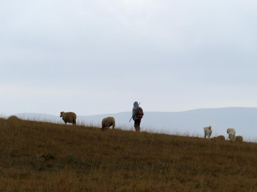 antica via dei pastori - sibillini (86)